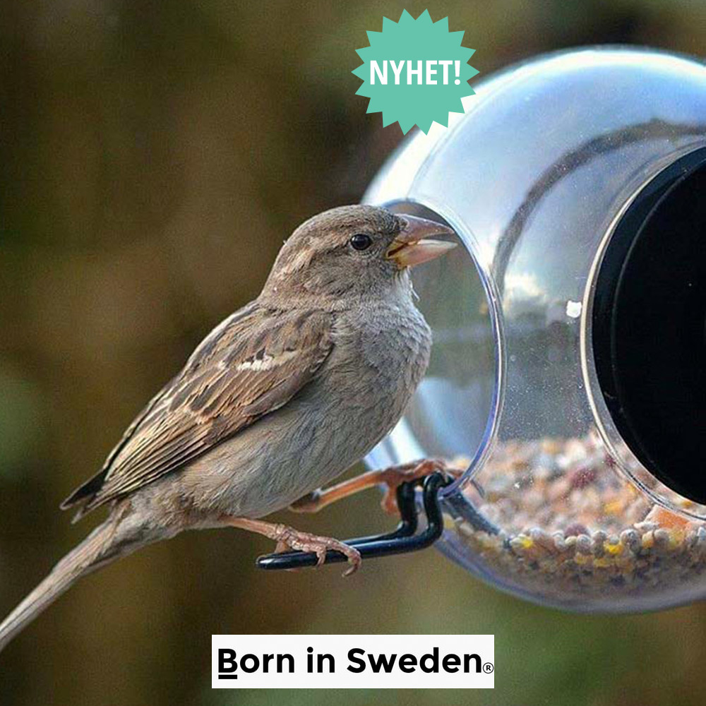 Born in Sweden fuglemater