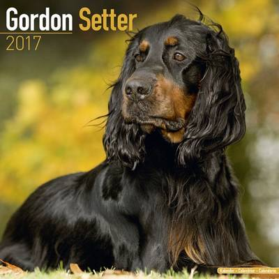 Gordon Setter Calendar 2017 - Avonside Publishing Ltd