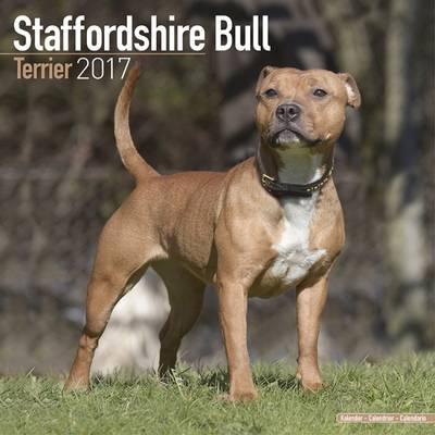 Modernistisk Staffordshire Bull Terrier Calendar 2017 - Avonside Publishing Ltd YG-78