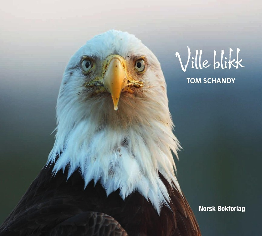 Ville blikk - Tom Schandy