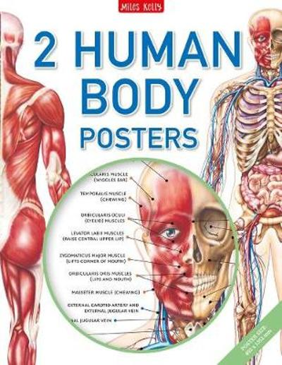 Human Body Poster Pack - Belinda Gallagher