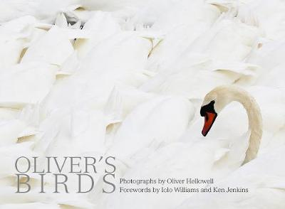 Oliver's Birds - Oliver Hellowell