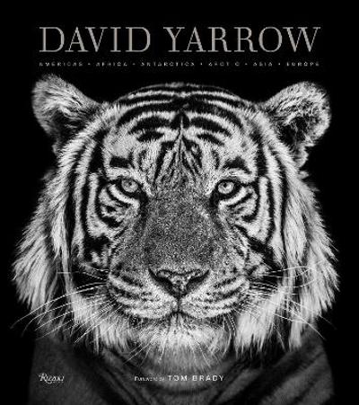 David Yarrow Photography - David Yarrow