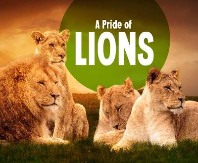 A Pride of Lions - Amy Kortuem